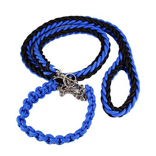 Petroad ColorPet Martingale Slip Lead Collar Bear Fruit Dog Leash for Medium and Large Dogs, Medium, Black Blue
