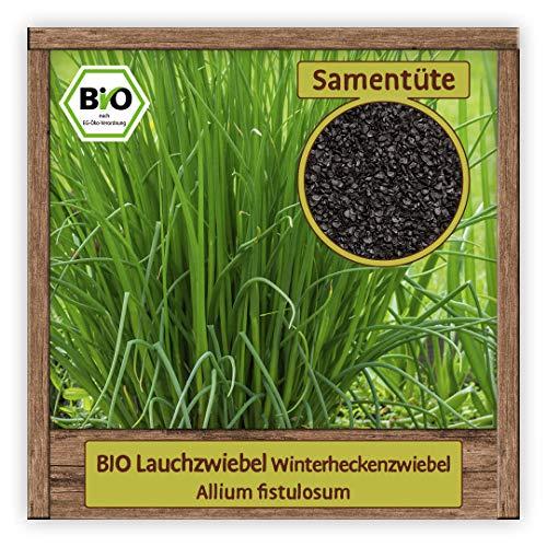 BIO Lauchzwiebel Samen mehrjährige Sorte Winterheckenzwiebel (Allium fistulosum) Gemüsesamen Lauch Saatgut