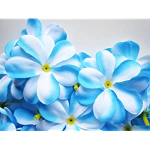 (24) Blue White Hawaiian Plumeria Frangipani Silk Flower Heads – 3″ – Artificial Flowers Head Fabric Floral Supplies Wholesale Lot for Wedding Flowers Accessories Make Bridal Hair Clips Headbands Dress
