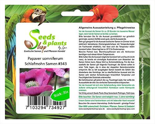 35x Papaver somniferum Schlafmohn Samen Blumen Pflanzen Garten #343