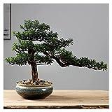 XIAOSAKU Artificial Bonsai Tree Simulation Plant Potted Zen Fake Green Plant Beating Pine Bonsai Adecuado para Sala de Estar Decoración de Escritorio Interior (Color : B)