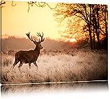 Hirsch im Sonnenuntergang Format: 100x70 auf Leinwand, XXL