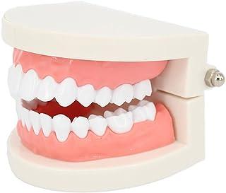 ROSENICE 歯科医 歯列模型 歯は着脱可能 指導用模型