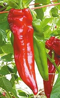 David's Garden Seeds Pepper Hot Mattadores GC3771 (Red) 25 Non-GMO, Hybrid Seeds