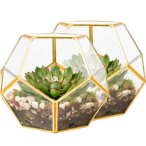 Deco 2 Pk Gold-Trimmed Glass Geometric DIY Terrarium, Succulent & Air Plant- Sphere Shaped for Indoor Gardening Decor- Create Your own Flower, Fern, Moss Centerpiece- Amazing Holiday and Wedding Gift