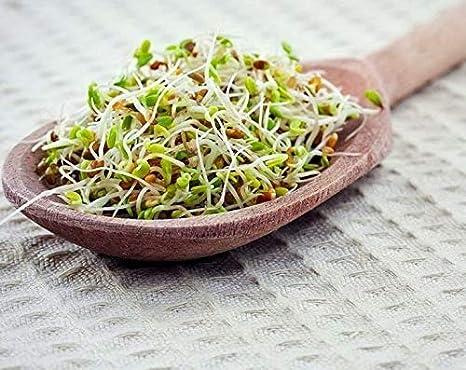 Mezcla picante de semillas germinadas, 5 Libras - brócoli, rábano, alfalfa, kosher, crudo