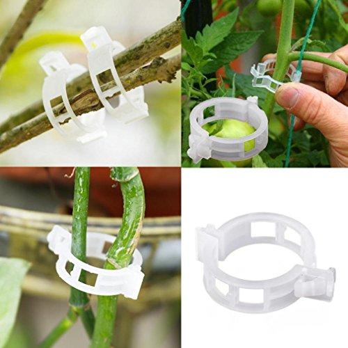 Hunpta 100pc Treillis Tomate Clips Prend en charge SE connecte Plants de vigne Treillis Ficelle cages, multicolore
