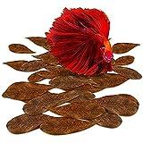 SUNGROW MINI Catappa HOJAS: 50 piezas de almendro indio tropical deja para el agua rica en tanino