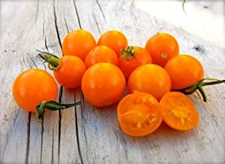 10 Sungold Select Tomato Vegetable Seeds