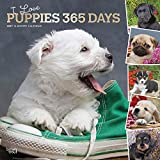I Love Puppies 365 Days 2021 12 x 12 Inch Monthly Square Wall Calendar with Foil Stamped Cover, Animals Dog Breeds Puppies