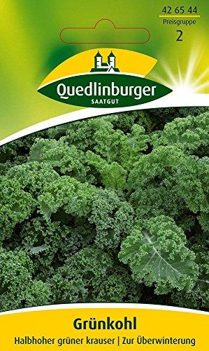 Kohlsamen - Grünkohl Halbhoher grüner krauser von Quedlinburger Saatgut