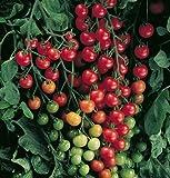 David's Garden Seeds Tomato Cherry Supersweet 100 SL3981 (Red) 25 Non-GMO, Hybrid Seeds