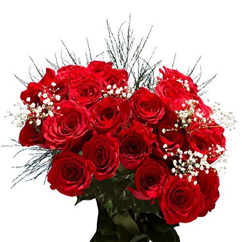 GlobalRose 1 Dozen Red Roses & Fillers- Beautiful Fresh Cut Flowers