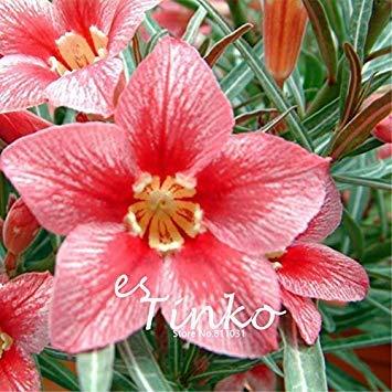 VISTARIC Army Green: 100pcs Petunia Seeds Four Seasons peut être planté 25 sortes de couleurs Pétunia Graines de fleurs Bonsai pour le bricolage jardin Plantation vert