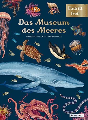 Das Museum des Meeres: Eintritt frei!