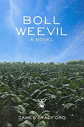 Boll Weevil