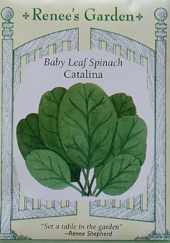 Spinach, Catalina, Baby Leaf