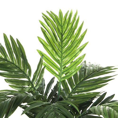Areca Palme H45 D60 cm, grün im Tontopf D 11.5  cm - 3