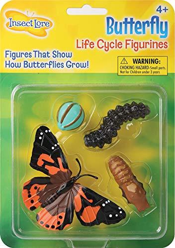 Insect Lore 48122 Butterfly Life Cycle Figuren, Lebenszyklus 4 Stufen: Ei, Raupe, Puppe und Schmetterling, bunt