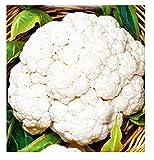 Graines de chou - fleur boule de neige - fruits - moyenne tardive - chou - fleur - brassica oleracea - les meilleures graines de plantes - fleurs légumes - rares - 4400 graines environ - cf006