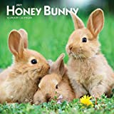 Honey Bunny 2021 7 x 7 Inch Monthly Mini Wall Calendar, Domestic Small Cute Animals