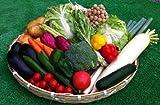 しっかり使える定番お野菜 10品 セット