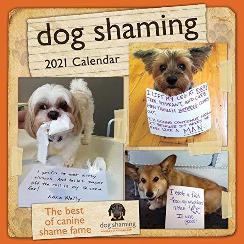 Dog Shaming 2021 Wall Calendar