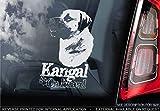 Sticker International Kangal - Autoaufkleber - Hund Schild Fenster, Stoßstange Aufkleber Geschenk - V001 - Weiß/Klar - Externe Außen Aufdruck, 165x100mm