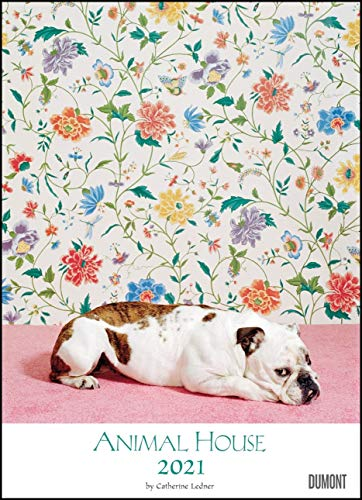 Animal House Kalender 2021 – DUMONT Tier-Kalender – Foto-Kunst – Poster-Format 49,5 x 68,5 cm