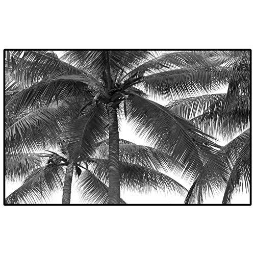 Palm Tree Camper Rugs Outdoor Floor Rugs for Living Room Palm Tree Silhouette Exotic Plant on Dark Theme Foliages Relaxing in Nature Image Boat Carpet Black 3 x 5 Ft