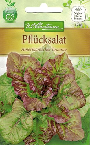 Chrestensen Pflücksalat 'Amerikanischer brauner'