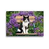 CALVENDO Premium Textil-Leinwand 45 x 30 cm Quer-Format Katze sitzt auf einem Gartenstuhl vor blauen Blüten, Leinwanddruck von Katho Menden