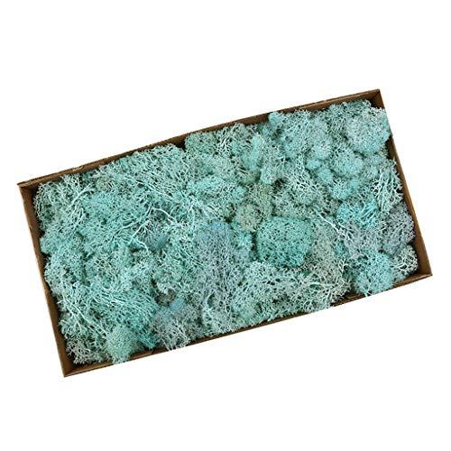 LOVIVER Musgo De Reno Preservado Artificial para Terrarios Jardines De Hadas Artes Y Manualidades 20 Colores - Lago Azul