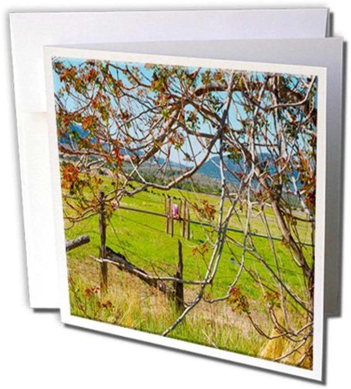 3D Rosa Grußkarten mit Umschlägen, 12 Stück (GC (GC (GC 51968 _ 2) B072L2YG5W | Genial  | Marke  | Sehr gute Qualität  4b8858