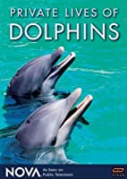 Nova: Private Lives of Dolphins [DVD] [Import]