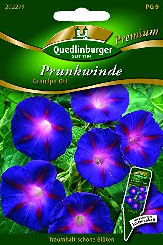 Winde Prunk- Grandpa Ott QLB Premium Saatgut Kletterpflanze