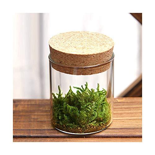 (観葉植物)苔Terrarium ハイゴケ コルクボトル ミニ 説明書付