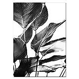 JXMK Lienzo de Arte de Pared en Blanco y Negro Pintura de Hoja de plátano Cartel de Hoja de Palma Tropical Pared de Sala de Estar nórdica 30x40 cm sin Marco