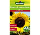 Dehner Blumen-Saatgut, Riesen Sonnenblume 'Gigant', 5er pack (5 x  4 g)