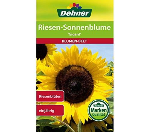 Dehner Blumen-Saatgut, Riesen Sonnenblume