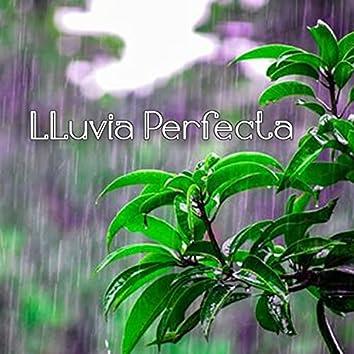 Lluvia Perfecta