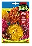Semillas Fitó 541 - Semillas de Crisantemo de los Jardines Variados