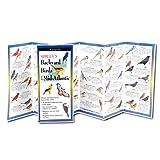 Del pieghevole Guida Sibley Backyard Birds Mid-Atlantic & Central America del Sud