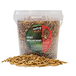 Extra Select Dried Mealworms Wild Bird Feed Treat