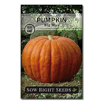 pumpkin seeds to plant