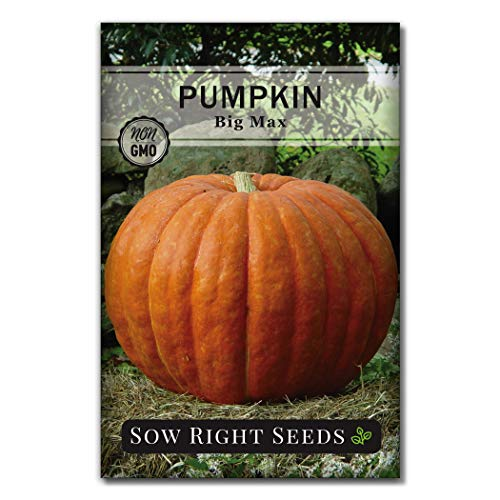Sow Right Seeds - Big Max Pumpkin Seed for Planting - Non-GMO Heirloom Packet...