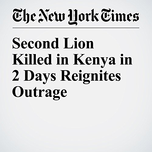 Second Lion Killed in Kenya in 2 Days Reignites Outrage audiobook cover art