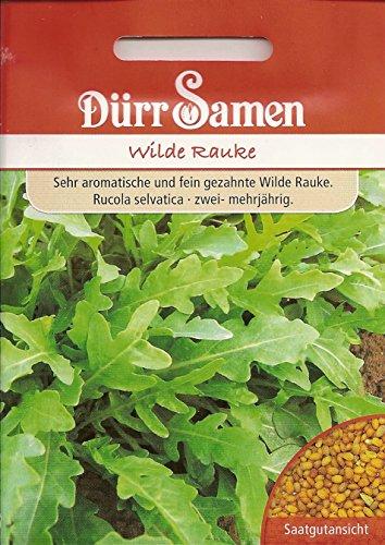 Rucola Wilde Raucke ca. 3000 Korn