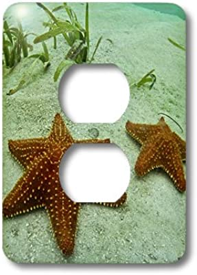 3dRose lsp/_211233/_6 Gold Glitter Seahorse Sunlit Ocean Tropical Scrapbook Style 2 Plug Outlet Cover