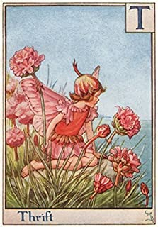 T = Thrift Fairy by Cicely Mary Barker. Alphabet Flower Fairies - c1934 - old print - antique print - vintage print - Flower Fairies art prints